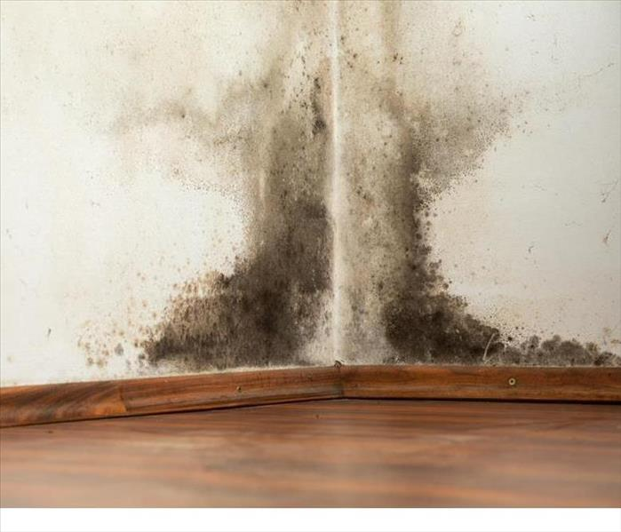 Mold in a Gunbarrel Home Before