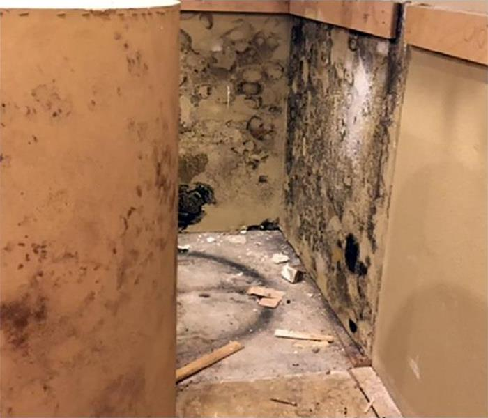 Mold Damage In Boulder