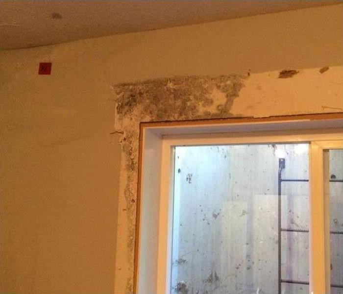 Mold growth in a window frame