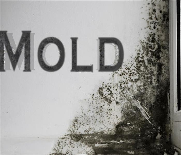 Mold Remediation Delayed Request To Servpro By Louisville Homeowners Only Compounds The Service And