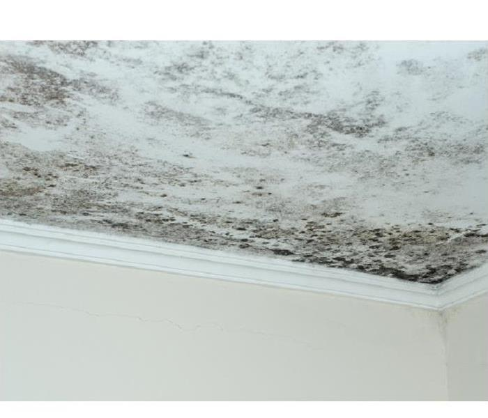 Mold Remediation How Professionals Use Negative Pressure to Remove Mold From Your Louisville Residence
