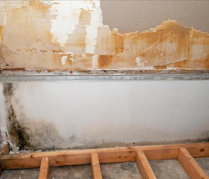 Mold Remediation Mold Damage Remediation Services Available For Boulder Area Residents