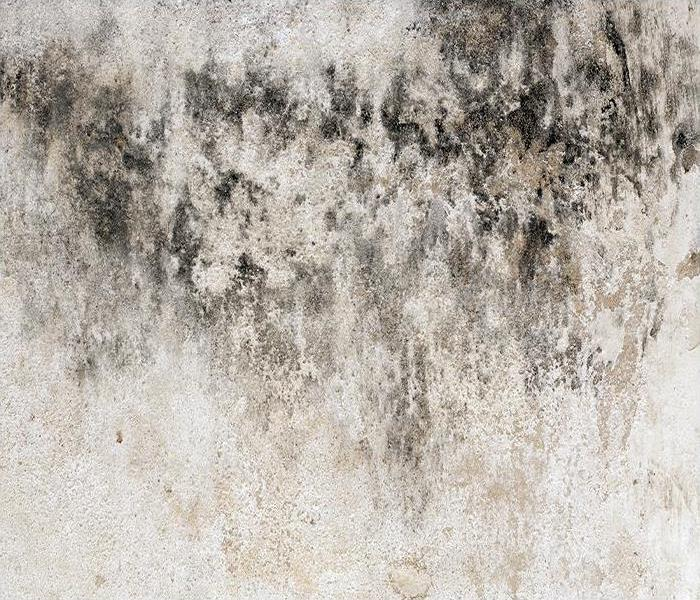 Commercial No Need To Panic After Mold Is Discovered In Your Boulder Property, Our Crew Can Help!