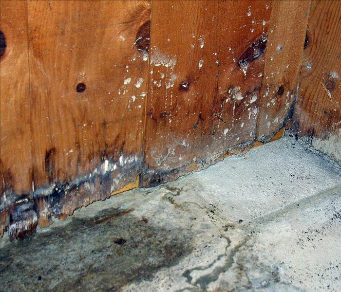 Mold Remediation Identifying White Mold Growth
