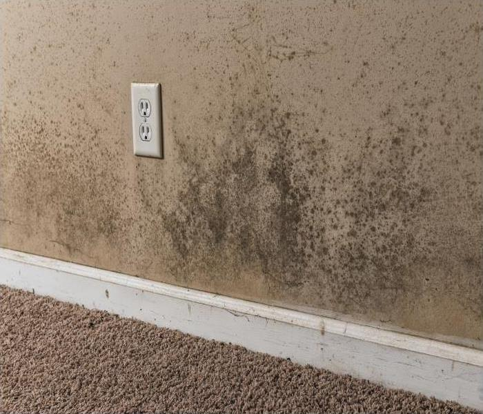 Mold Remediation The Role That Inspection And Assessment Play During Mold Damage Remediation In Boulder