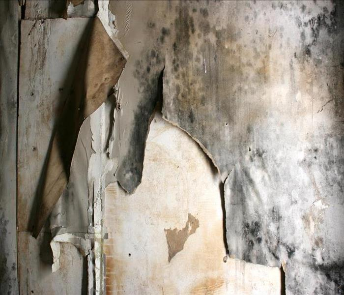 Mold Remediation Mold Damage in a Boulder Home Requires Professional Remediation to Prevent Spreading